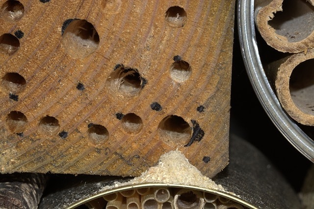ant holes and sawdust