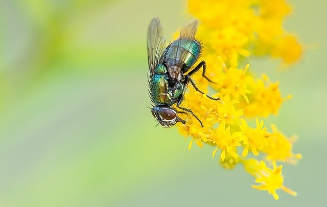 a fly on a flower