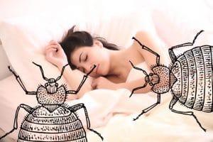 london bed bug infestation