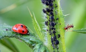 a range of common garden pests