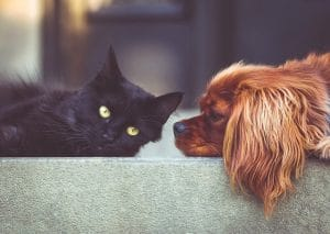 cat and dog pest control safety