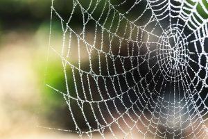 common uk spiders