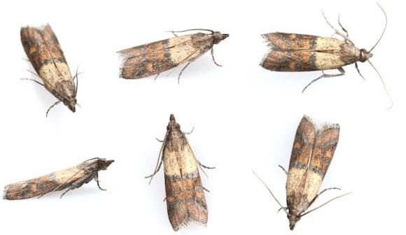 moth prevention image