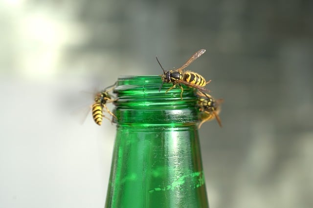 wasps around a drink