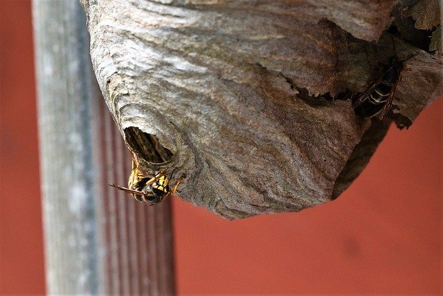 wasp nest in london shed