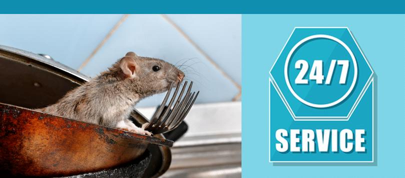 london rat control