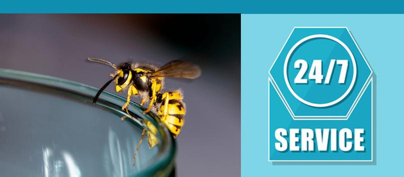 london wasp control