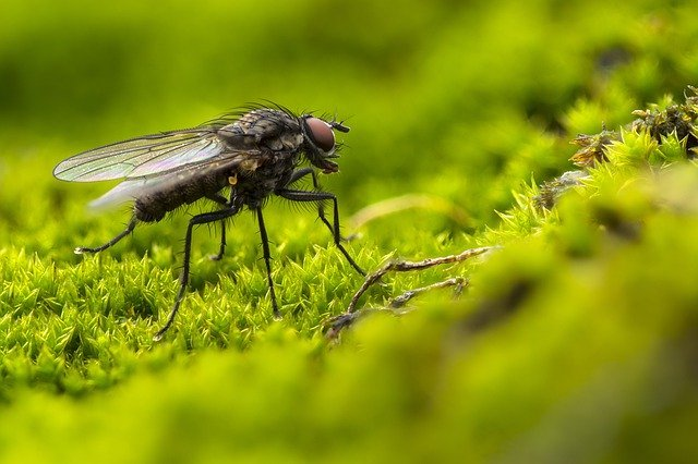 fly control in london property