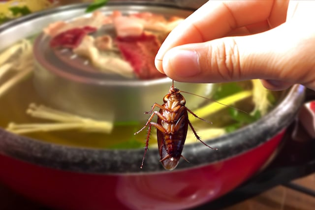 Cockroaches are in the food.