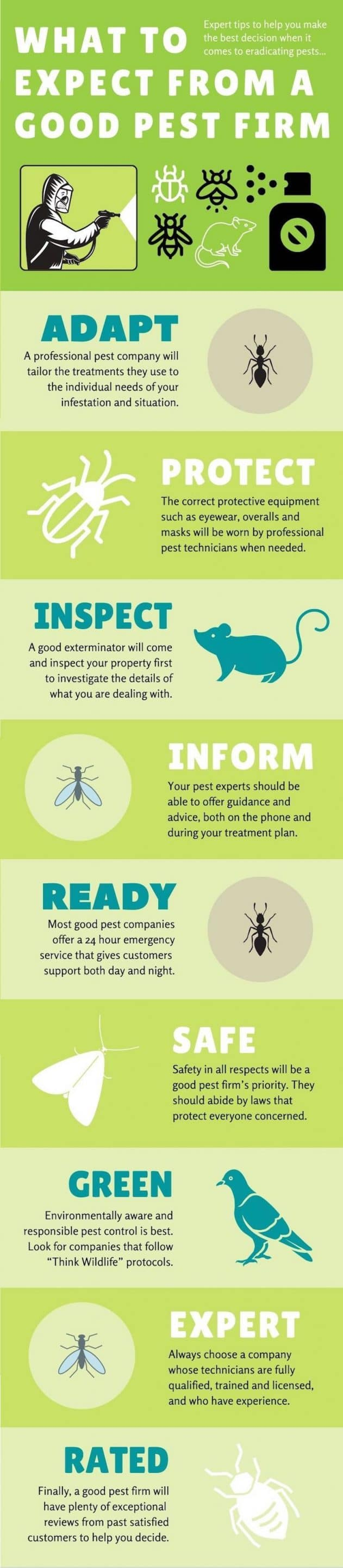good pest firm infographic website