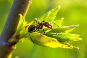 london garden overrun with ants