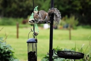 Damage squirrels can do to your garden