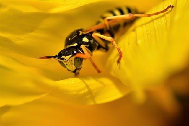 wasp in hot sun