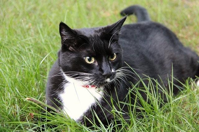 cat in a garden in london