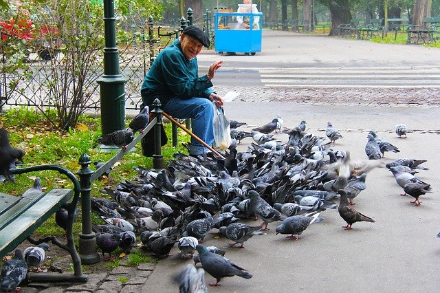 man surrounded by pigeons
