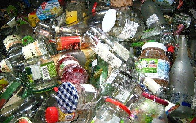 common pests on rubbish