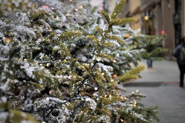 bugs in christmas trees