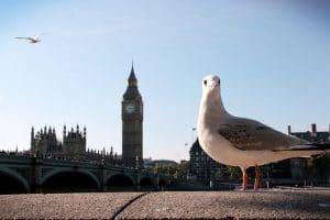 seagull in london centre