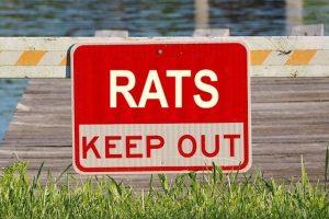 rats keep away
