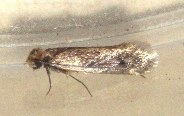 do moths eat clothes