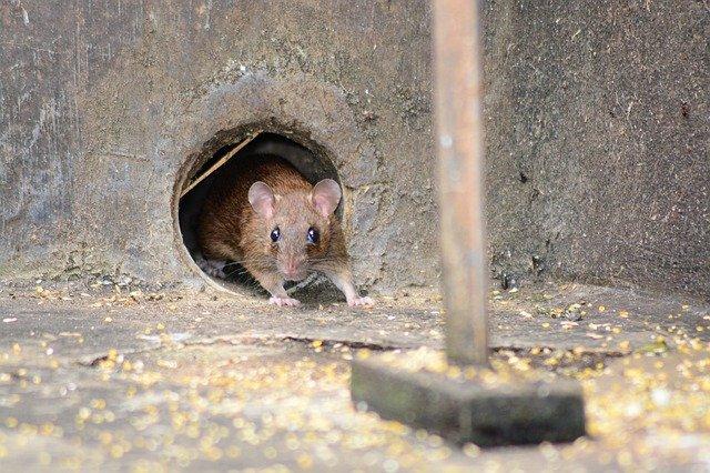 mice at work