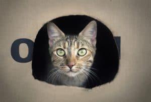 cat kept safe during pest treatment