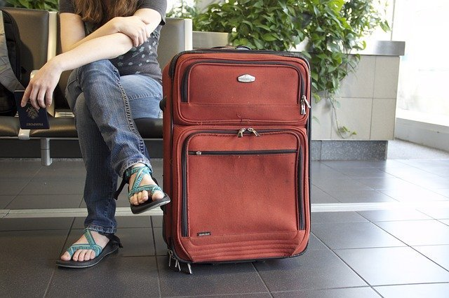 suitcases catch bed bugs