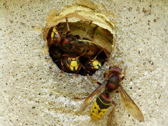 will a wasps nest damage my house