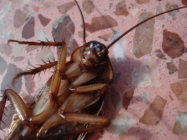dead cockroaches in london home