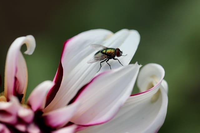 summer flies in the garden