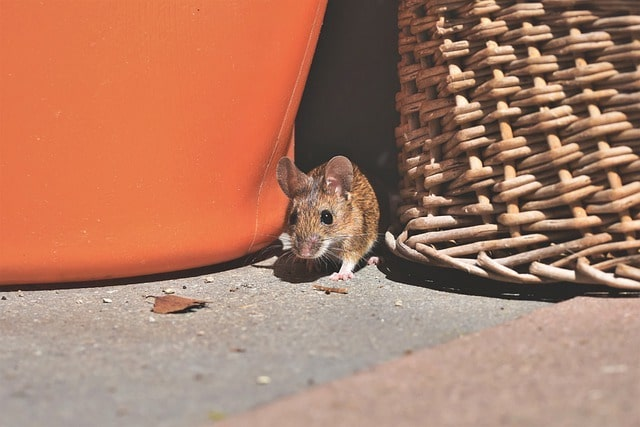 mouse hiding in clutter