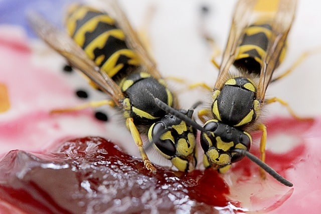 wasp free picnic