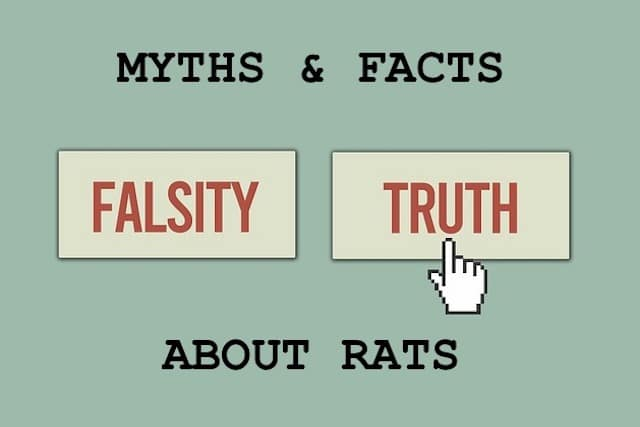 facts about rats in london