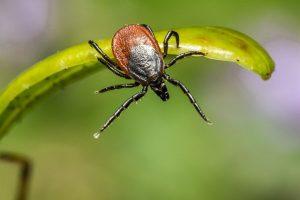 prevent lymes disease tick